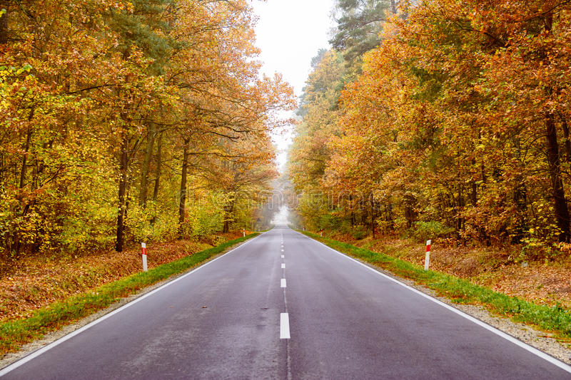 Autumn wet road through the forest royalty free stock photos