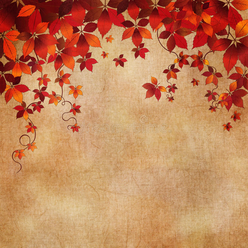 Download Autumn Wild Grapes Leaves Background Stock Images - Image: 26422884