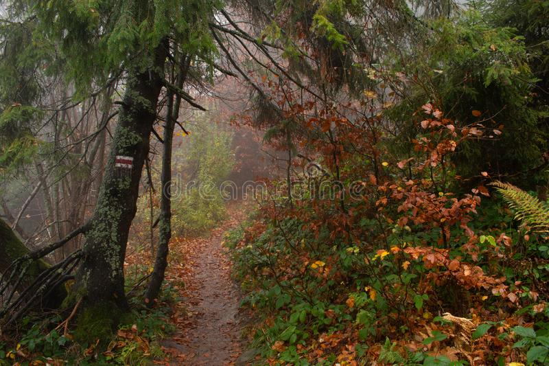Autumn in a wild hazy forest. Road to nowhere. Bieszczady National Park. Red trail blazing i the mountain stock photography