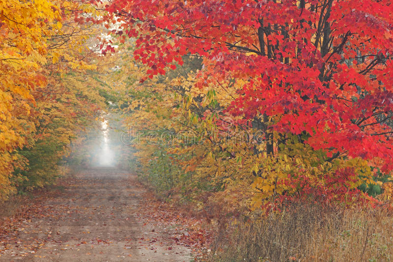 Autumn Wilderness Road royalty free stock photos