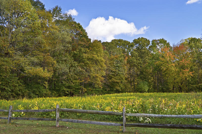 Download Autumn Wildflowers stock photo. Image of field, foliage - 34772838