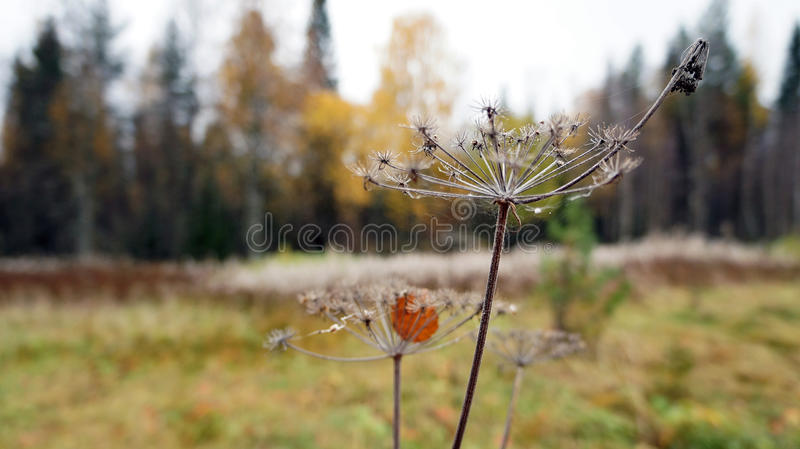 Autumn wilting royalty free stock photography