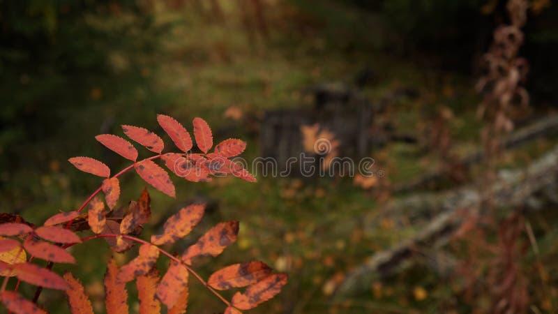 Autumn wilting royalty free stock image
