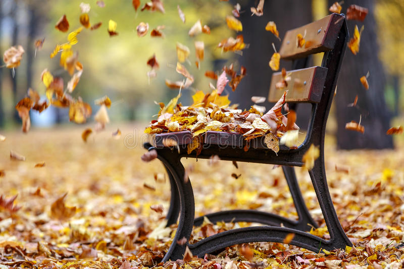 Autumn wind in the park stock images
