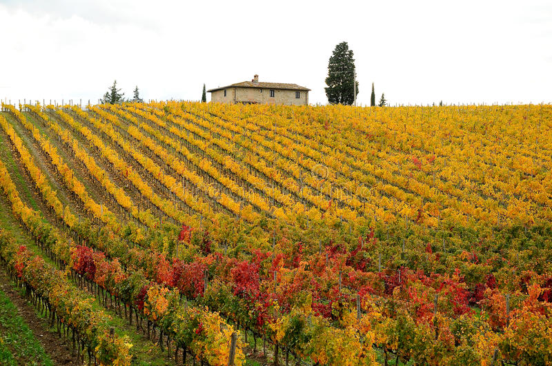 Autumn in a Wineyards in Tuscany, Chianti, Italy stock photos