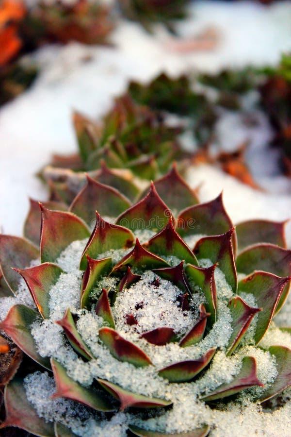 Autumn&winter arkivfoto