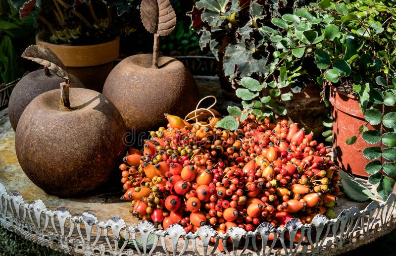Autumn Winter Decoration with Metallic Rusted Apples and Red Berries on an old Table stock photos