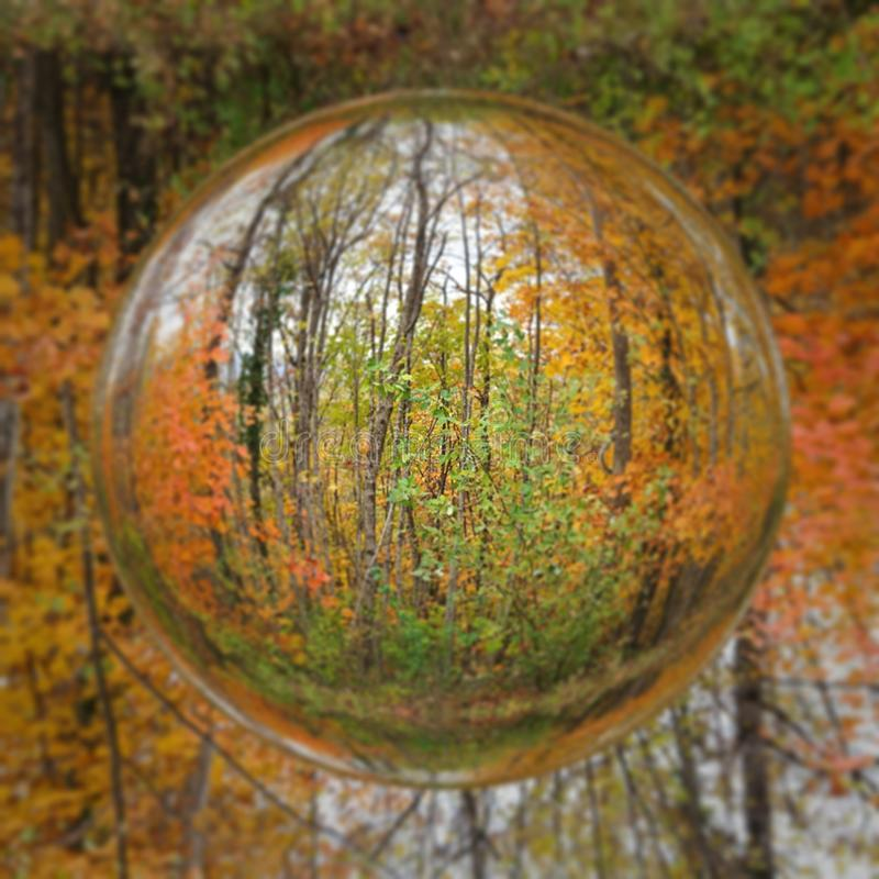 Free Autumn Winter Nature Golden Forest Abstract Art Stock Photography - 164540002