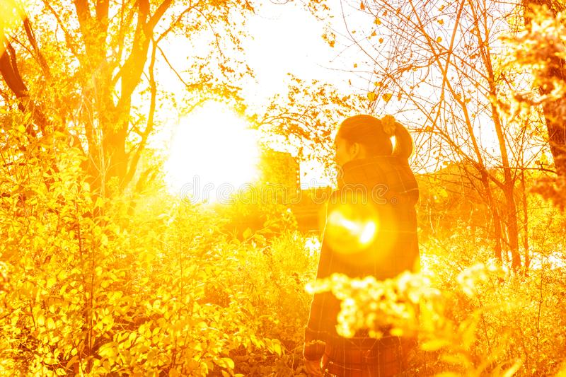 Autumn woman in beautiful autumn yellow sun flare nature with falling leaves in forest. Autumn woman in beautiful autumn yellow sun flare nature with falling stock image