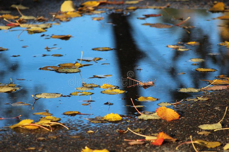 Autumn is a wonderful time, yellow leaves and puddles stock photo