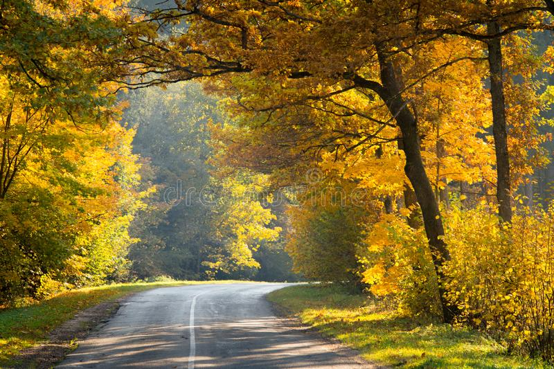 Autumn wonderland. Road in yellow fall forest. Fall nature. stock photography