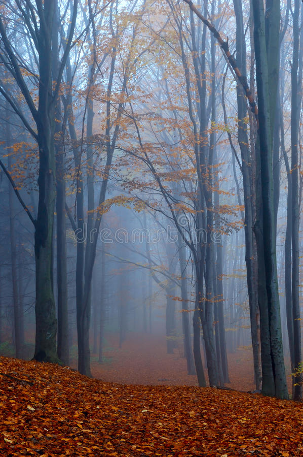 Autumn in wood royalty free stock photos