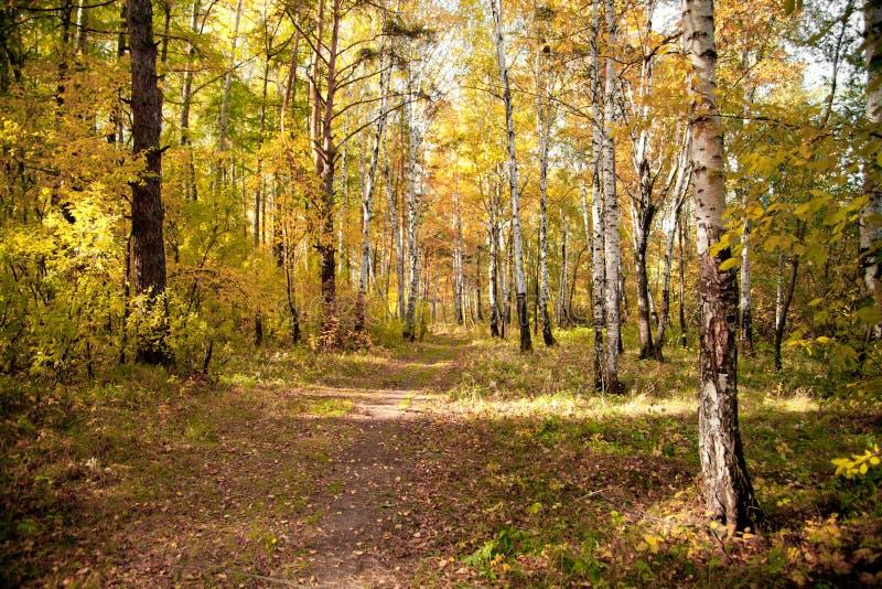Download Autumn wood stock photo. Image of timberland, plant, season - 16480450