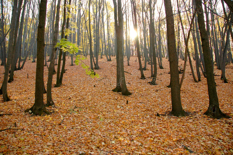Download Autumn wood stock photo. Image of outside, foliage, park - 22971024