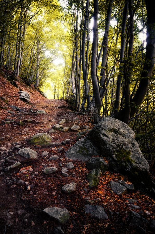 Autumn wood pathway. Pathway into an intricate wood with autumn fallen leaves on the ground and stones royalty free stock images