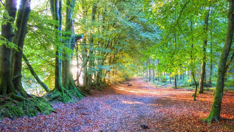 Autumn on Woodbury Common, Devon royalty free stock photos
