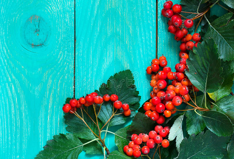 Autumn wooden background with hawthorn berries royalty free stock photo