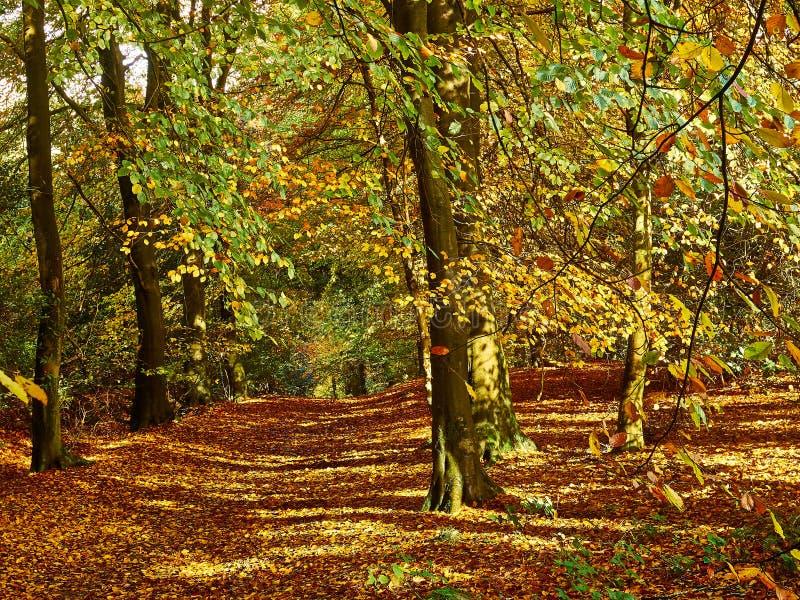 Autumn Woodland Colours dourado foto de stock royalty free