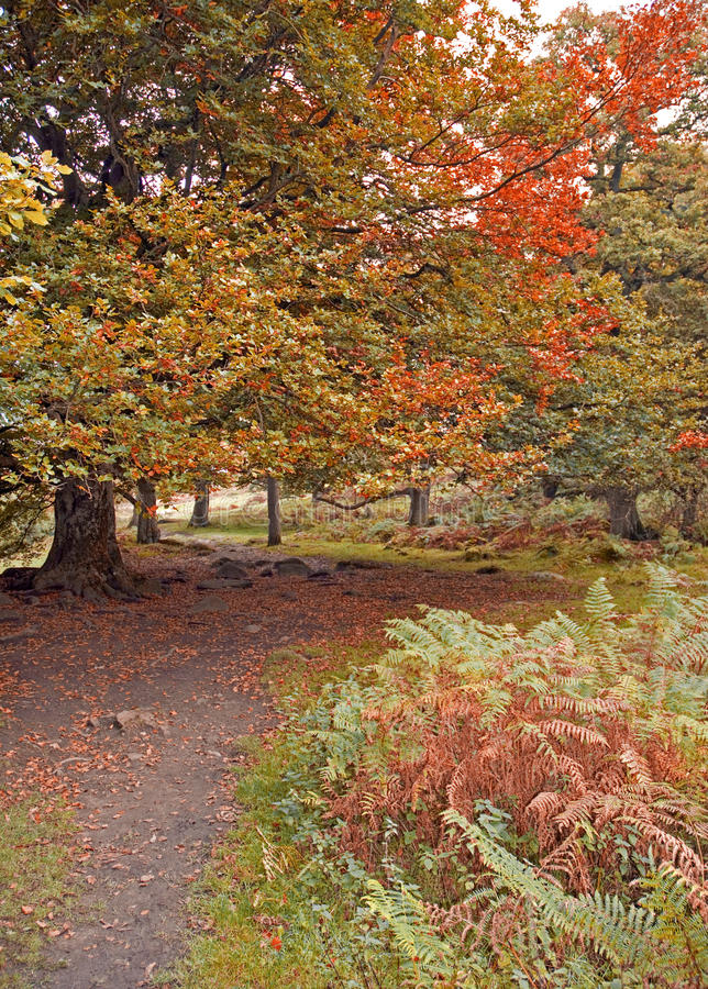 Download Autumn Woodland Path stock image. Image of country, path - 27681883