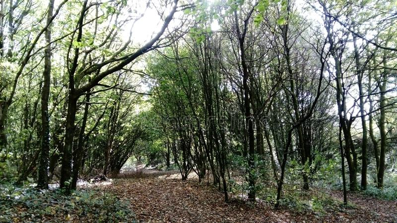 Autumn Woods royaltyfria foton