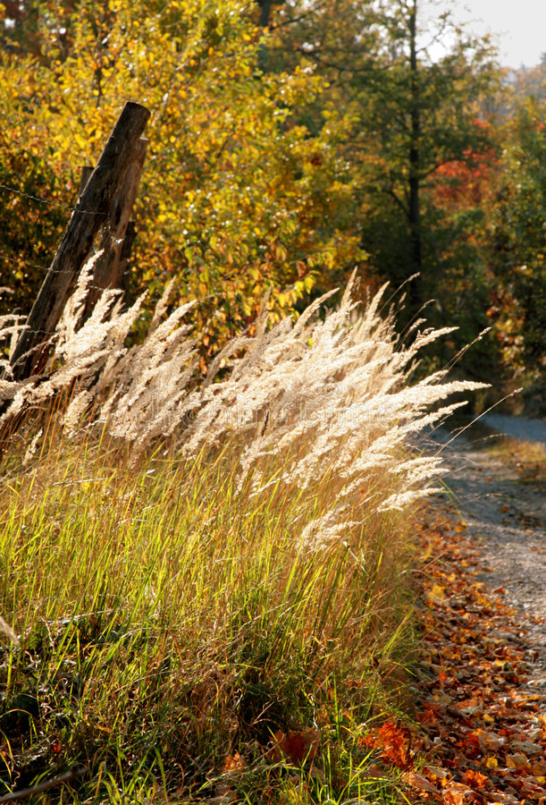 Autumn woods. Nice golden colored stock images