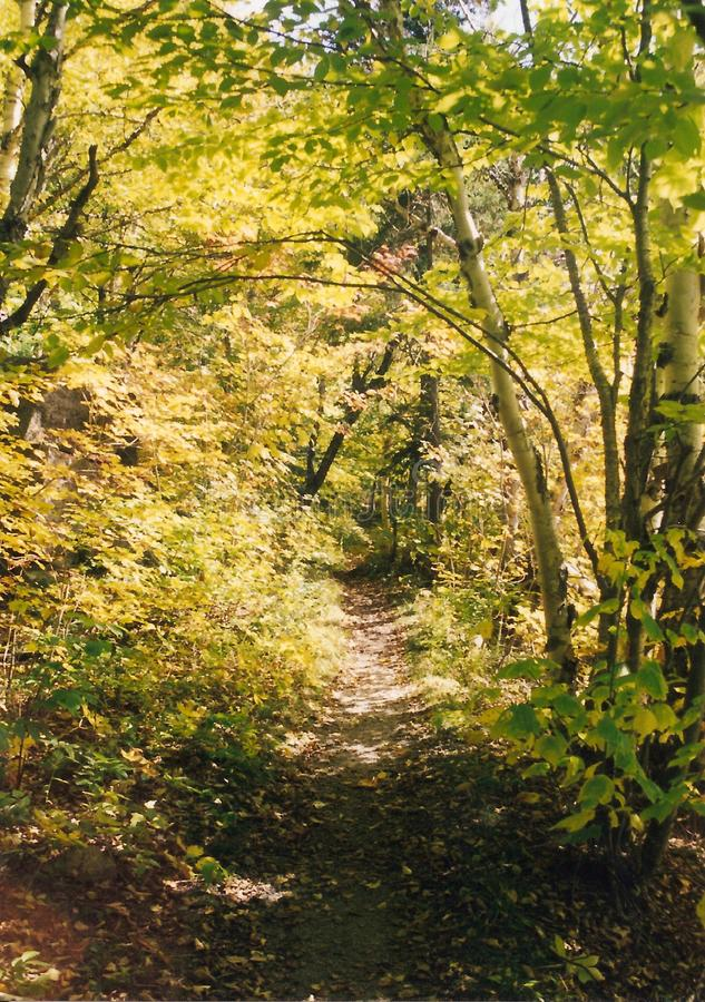 Autumn Woods royalty free stock photo
