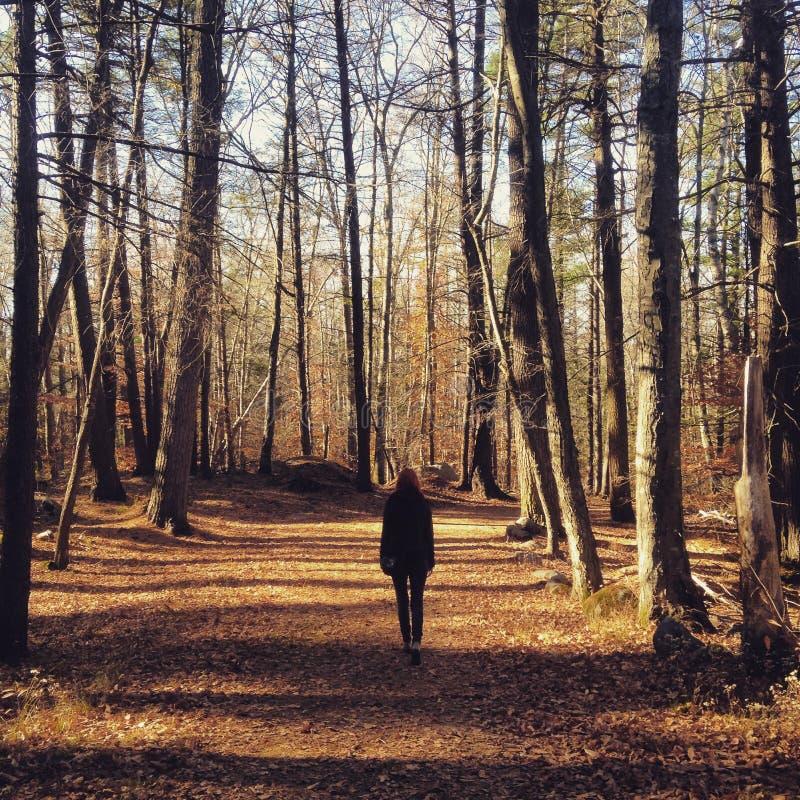 Autumn Woods photos stock