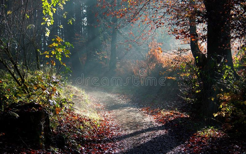 Autumn Woods stockbilder