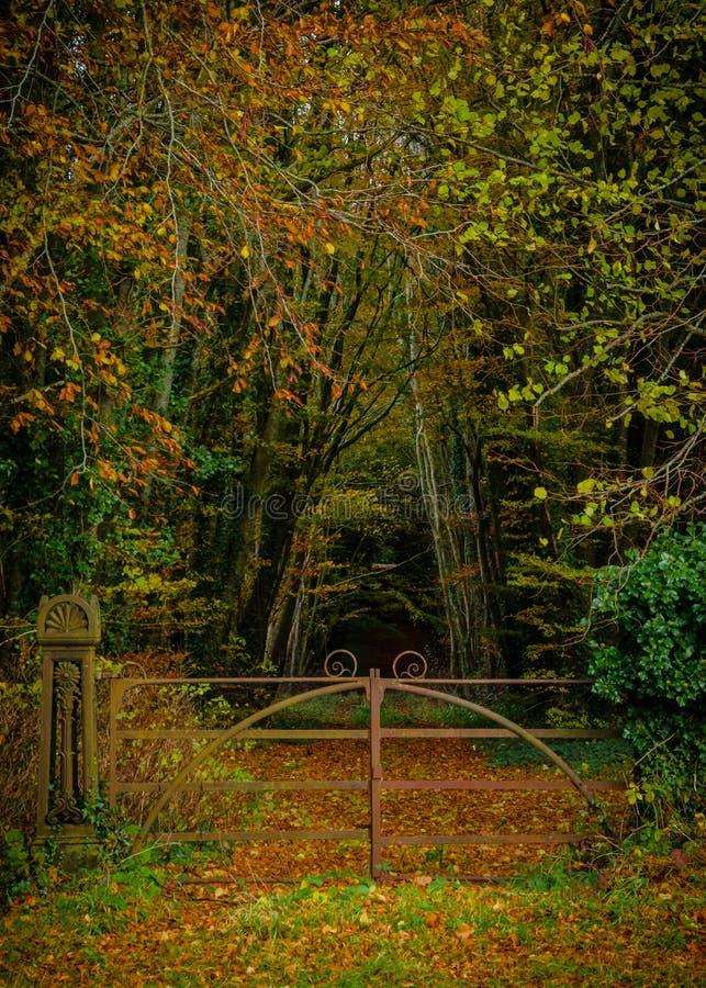 Autumn Woods fotografia stock