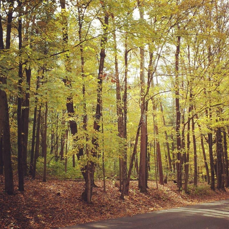 Autumn Woods fotos de archivo