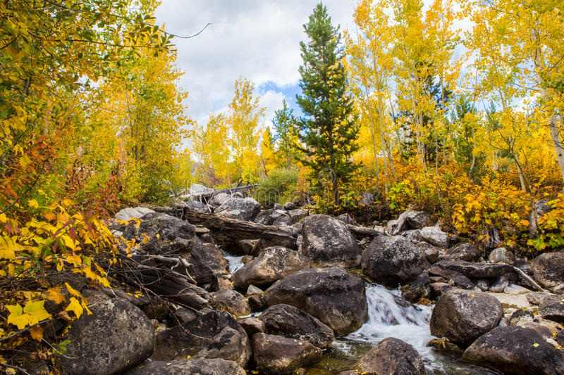 Autumn woods and creek. Autumn woods with yellow maple trees and creek with rocks and foliage in mountain royalty free stock photography