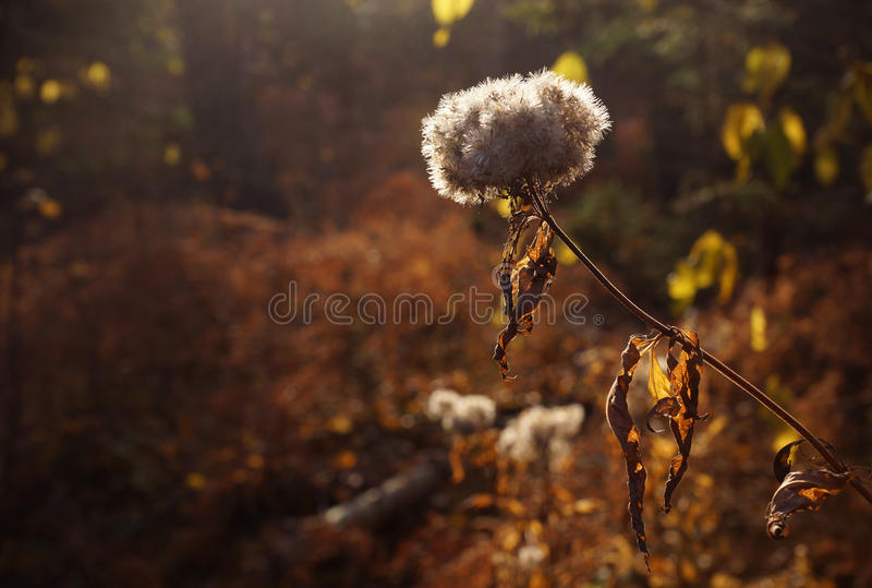 Autumn woods. Autumn forest background with soft and fluffy plant stock photos
