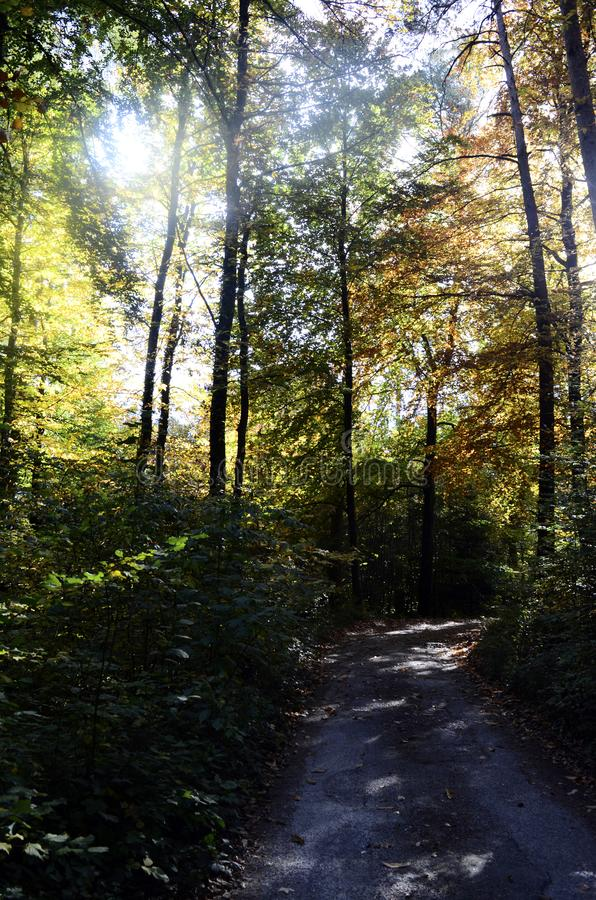 Autumn woods and road royalty free stock photos