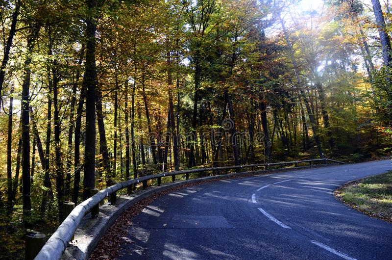 Autumn woods and road royalty free stock photo