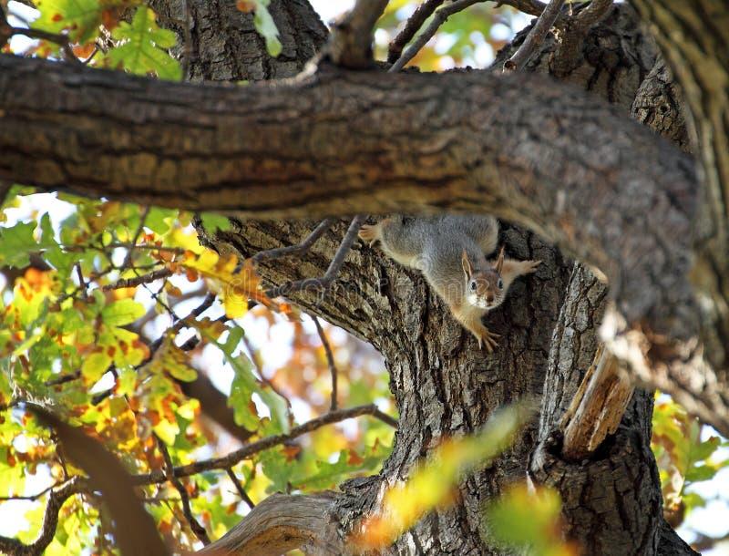 Autumn Woods met een eekhoorn royalty-vrije stock foto's