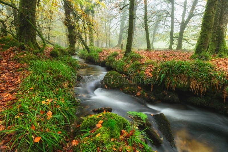 Autumn Woods och ström arkivbilder