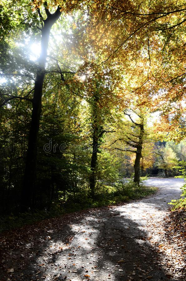 Autumn woods and road stock photography