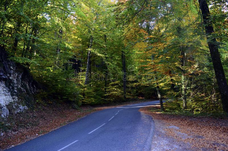 Autumn woods and road royalty free stock photography