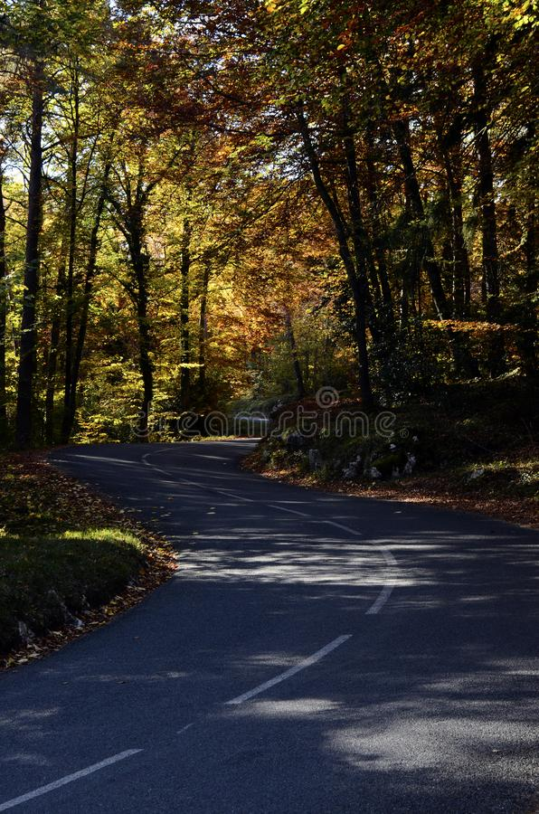 Autumn woods and road royalty free stock images