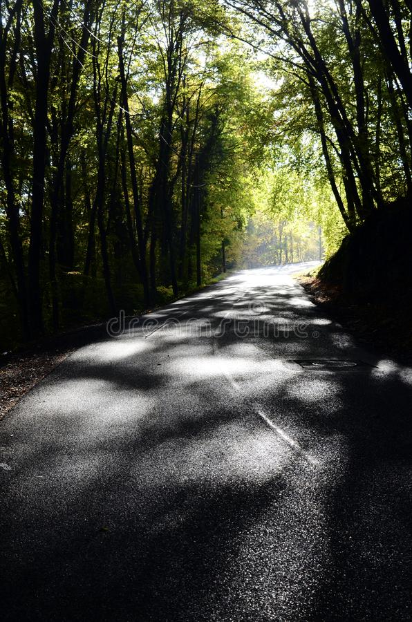 Autumn woods and road stock photo