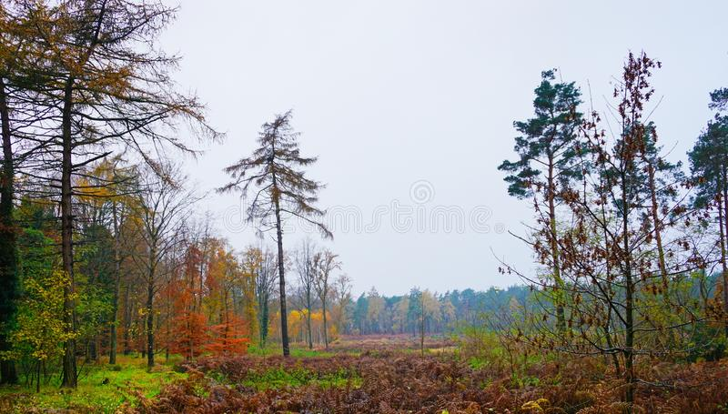 Woodland and heathland royalty free stock photography