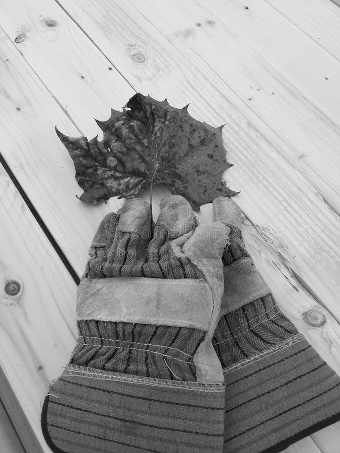 Autumn work stock photography