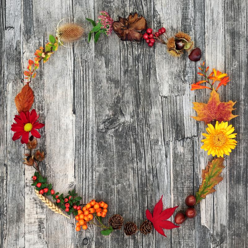 Autumn Wreath Beauty. Autumn harvest wreath abstract composition with a variety of natural flora and food on rustic wood background. Harvest festival theme royalty free stock images