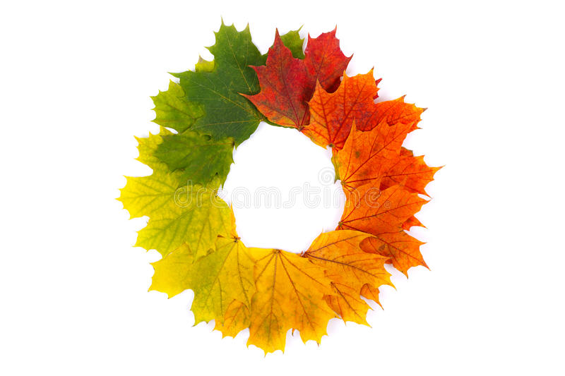 Autumn wreath. Colorful autumn leaves in form of wreath on white background royalty free stock images