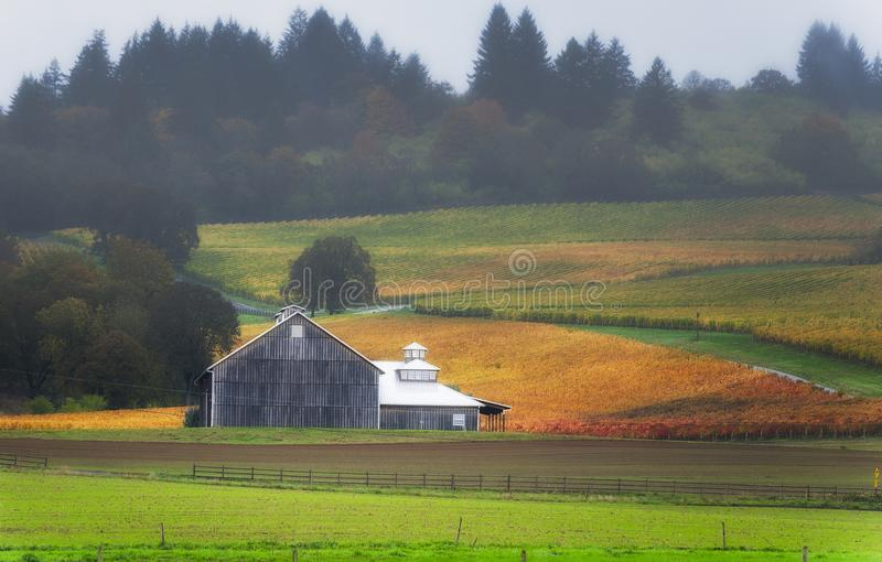 Autumn Yamhill County Wine Country landscape stock photography
