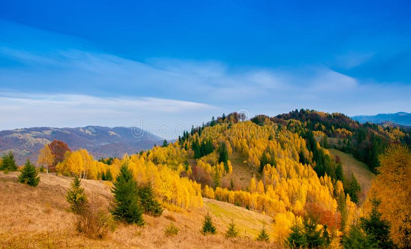 Yellow Beautiful Trees. Autumn Yellow and Beautiful Trees royalty free stock photography
