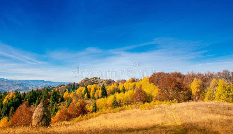Yellow Beautiful Trees. Autumn Yellow and Beautiful Trees stock photography