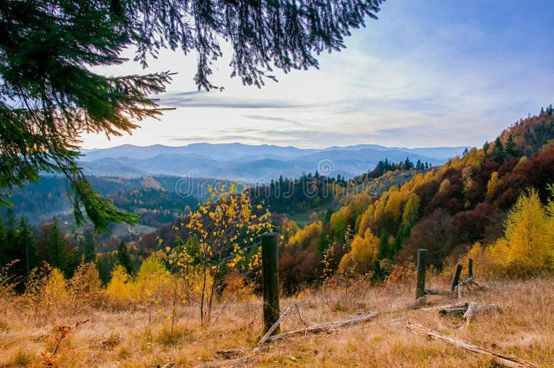 Yellow Beautiful Trees. Autumn Yellow and Beautiful Trees royalty free stock images