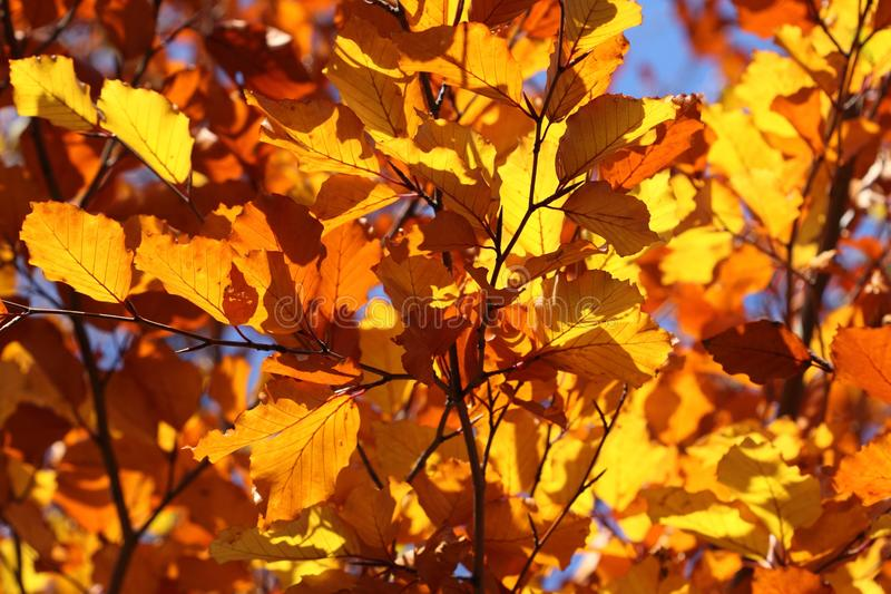 Autumn, Yellow, Branch, Leaf stock photo