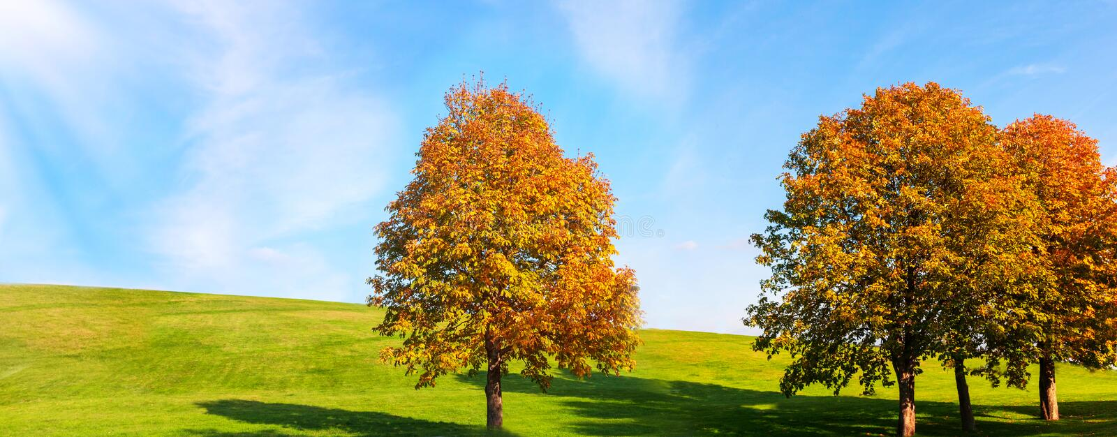 Autumn yellow chestnut trees against the background of green grass and bright blue sky. Autumn bright background. stock image